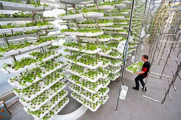 The rise of rooftop gardens
