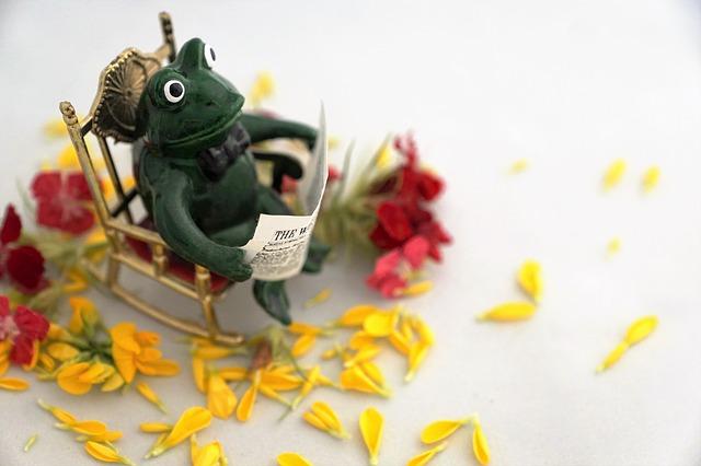 frog-2422427_640