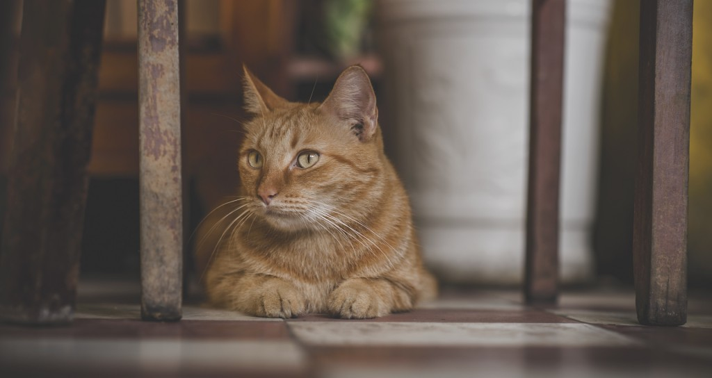 If it's well-behaved, the cat can stay.