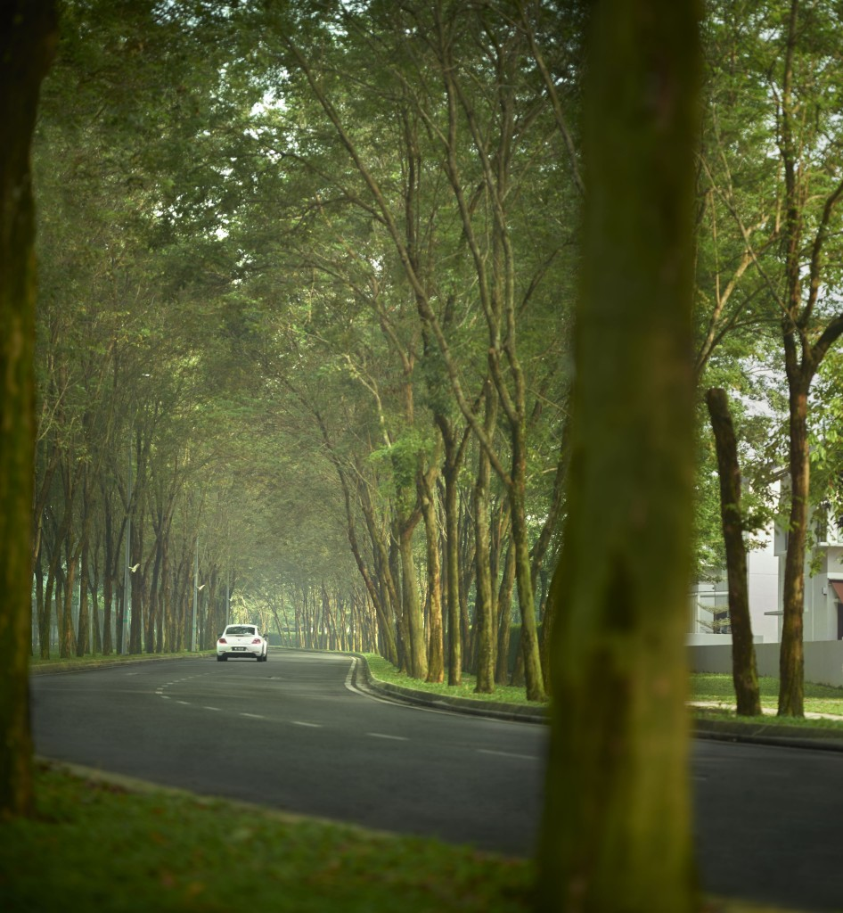 Jade_Hills_township_-_Tall_rosewood_trees_that_shades_the_winding_roads_of_Jade_Hills_giving_it_a_sense_of_place.tif