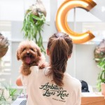 Common Ground at The Square by Jaya One, Petaling Jaya, is the very first pet-friendly coworking space in Malaysia.