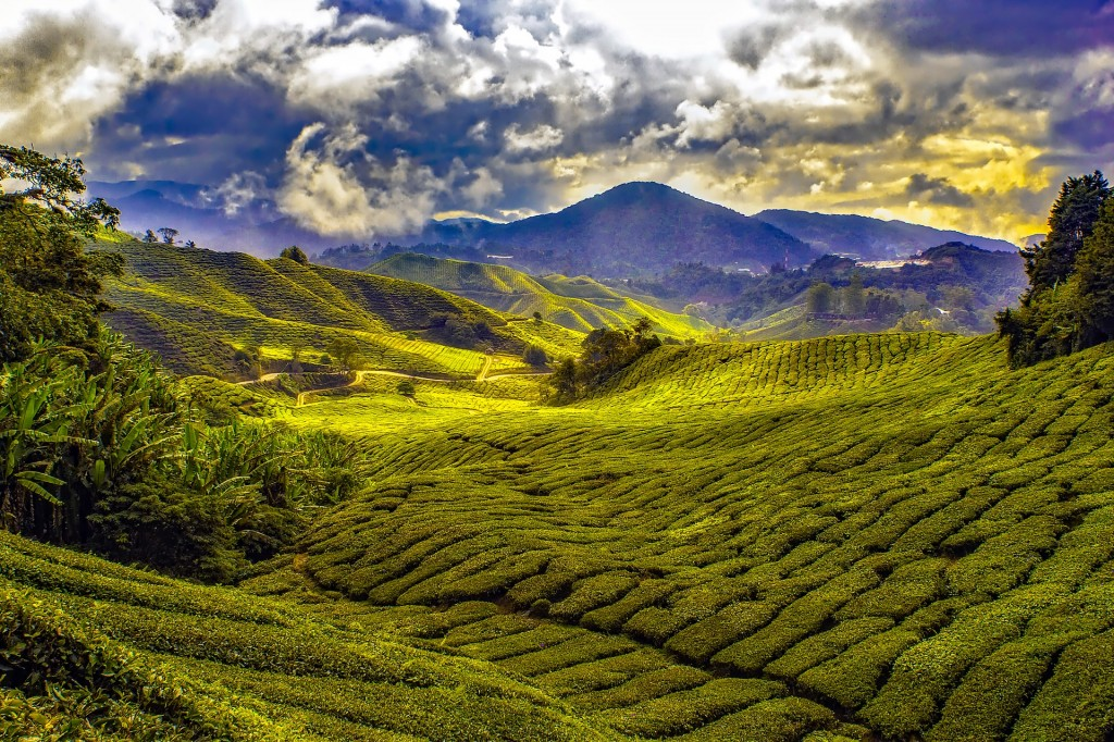 Malaysia_landscape