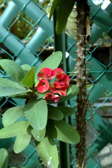 所种植物若属于尖叶细叶或尖长带刺,则具有「挡煞」作用。