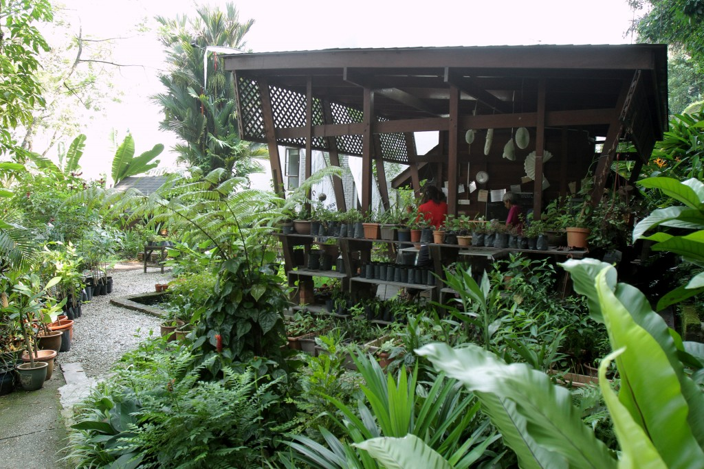 Free Tree Society Bangsar for Top 10 Free Things to do in Klang Valley.