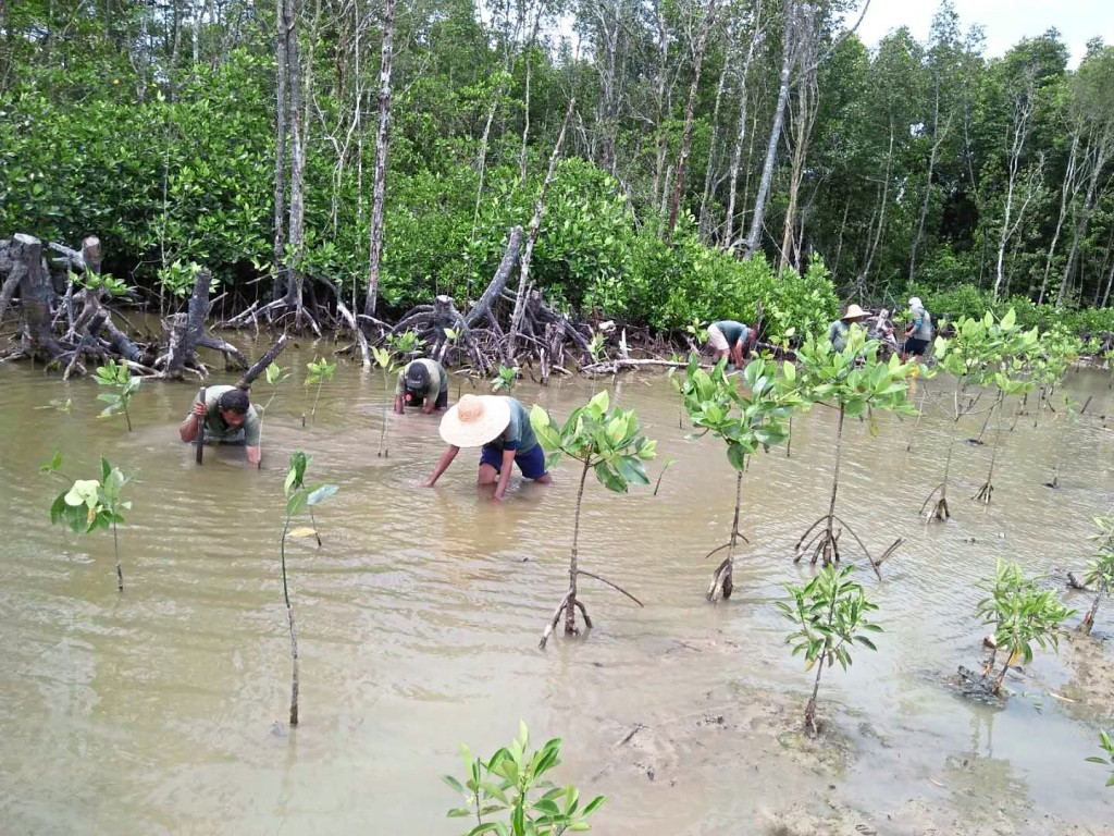 Mangrove transplanting process by Forest City landscape workers.