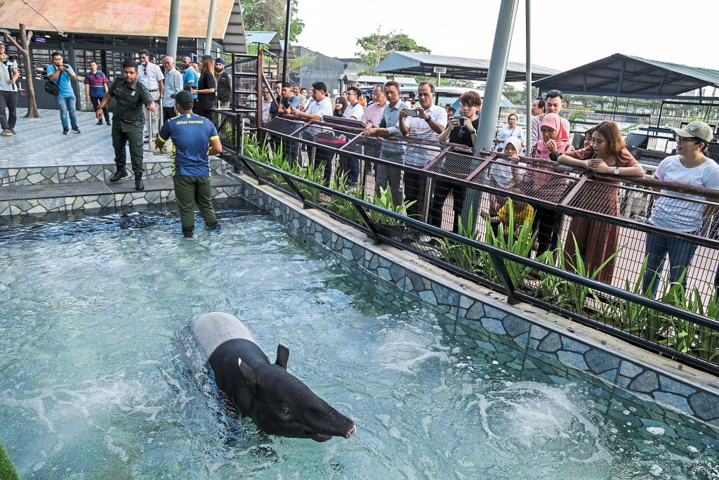First in Malaysia and only in 99 Wonderland Park, the Malayan Tapir exhibit comes with a jacuzzi pool.