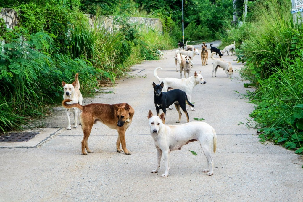 The number of strays have recently spiked