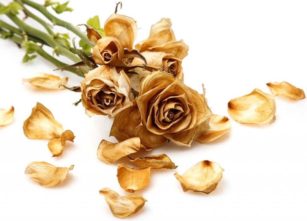 Dry rose flower