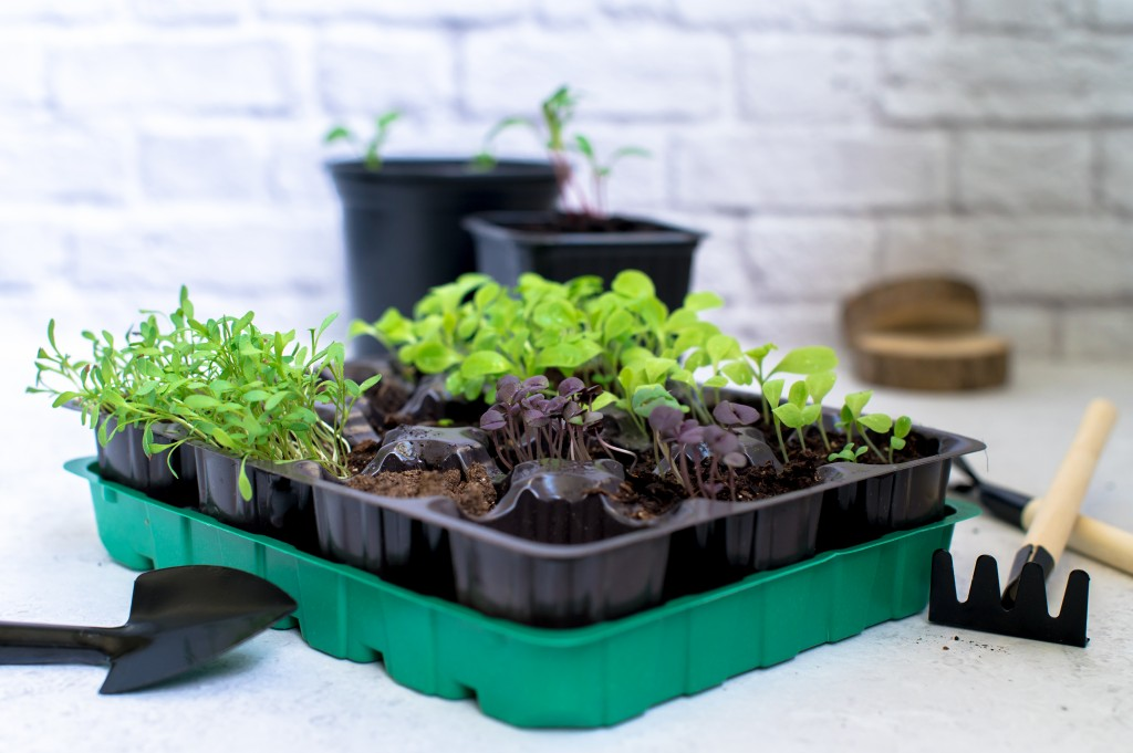 Six Easy Herbs and Vegetables To Grow At Home