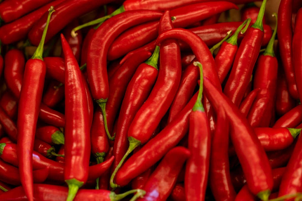 how to grow chilli at home