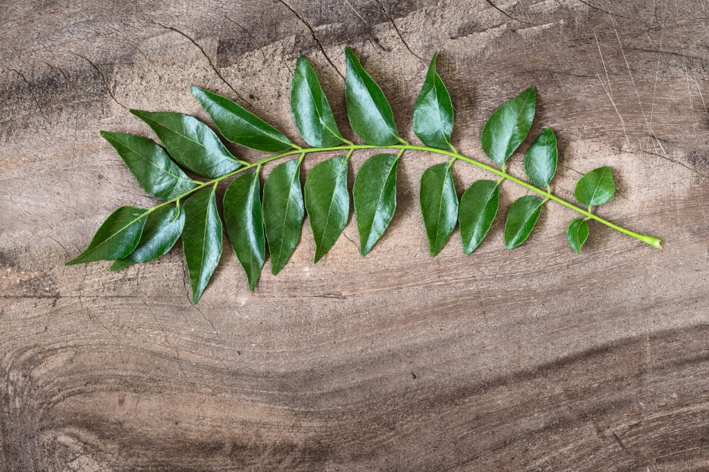 How to grow curry leaves at home