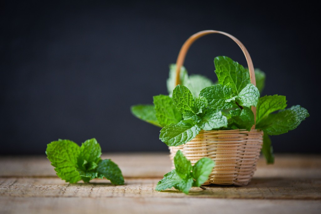 Growing Mint At Home